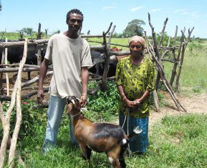 Caution Shonhai & wife Susan show the cattle and goats that MBIRA CDs bought, in 2009